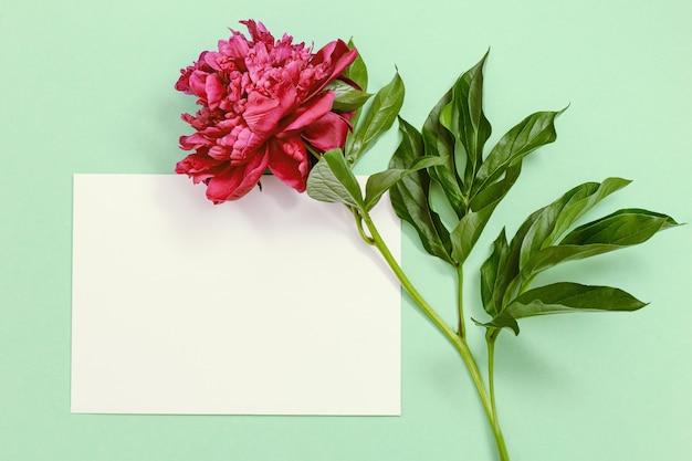 파스텔 그린에 붉은 모란 꽃 여름 꽃이 만발한 밝은 모란 계절 꽃 디자인