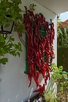 Красный перец, повешенный на окно, чтобы сушить на солнце, и использовать круглый год