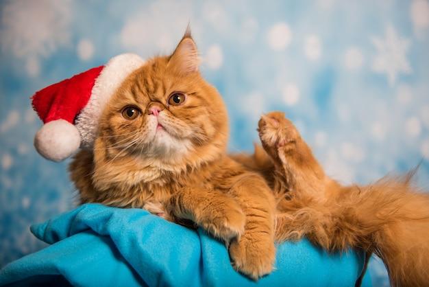 Красный персидский кот в красной шапке санта-клауса на синем новогоднем фоне со снегом