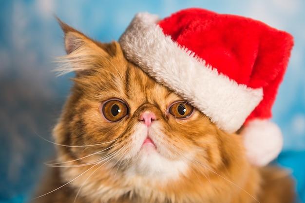 Красный персидский кот в красной шапке санта-клауса на рождество