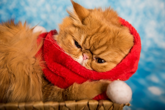 Красный персидский кот в красном шарфе санта-клауса на синем новогоднем фоне со снегом