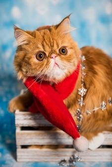 Красный персидский кот в красном шарфе деда мороза на рождество