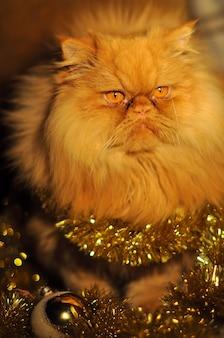 Портрет красной персидской кошки с гирляндами на новый год и рождество