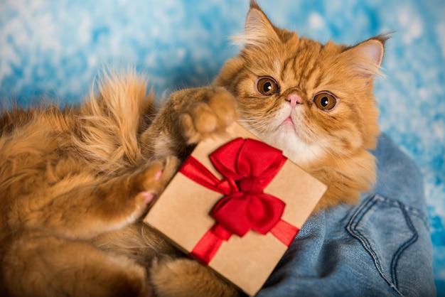 Красный персидский кот с подарочной коробкой на рождество на синем новогоднем фоне со снегом