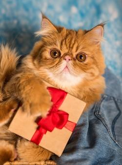 Красный персидский кот с подарочной коробкой на рождество