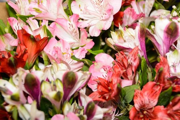 Красные, розовые и пурпурные цветки альстромерии. большой букет разноцветных альстромерий в цветочном магазине. красочная текстура альстромерии. многие альстромерии