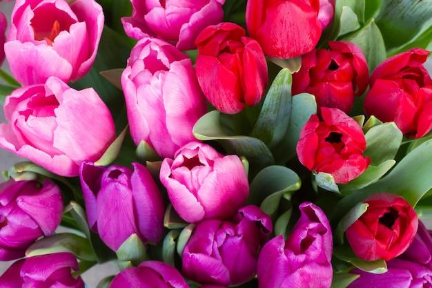 Красные, розовые и фиолетовые цветы тюльпана крупным планом