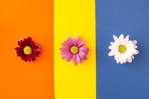 Красные, розовые и белые цветы, расположенные горизонтально на ярко-желтом, синем и оранжевом фоне. минимальная концепция плоской планировки
