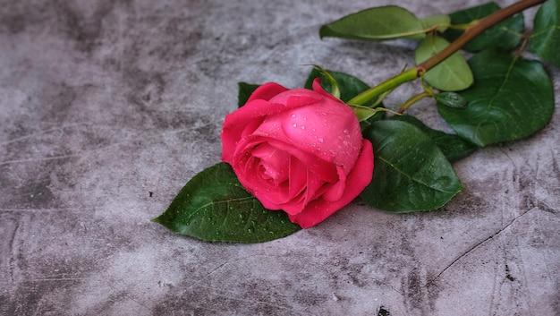 Красный розовый из роз