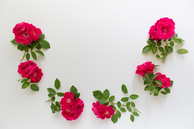 Red pink wild roses arranged in half circle on white background