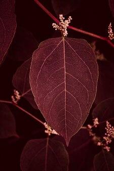 赤い植物は秋の季節に庭に残します