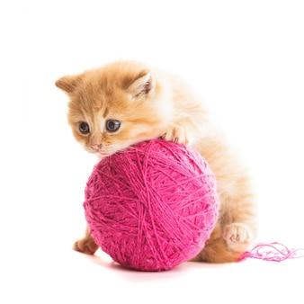 毛糸の紫色のボールを持つ赤い遊び心のある子猫は、白の上に横たわっています