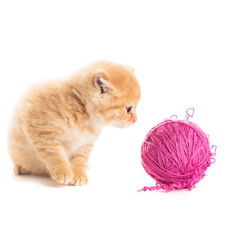 Red playful kitten with purple ball of yarn, is lying on white