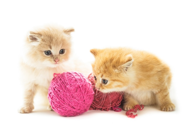 Red playful kittens with balls of yarn, is lying on white