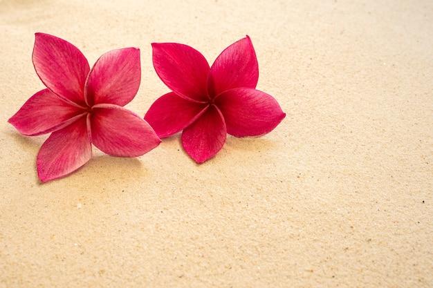 ビーチで赤いプルメリアの花