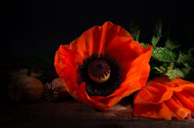 Red poppy flower on a dark wooden.