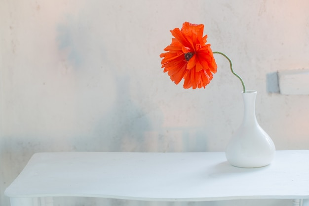 Red poppy in white vase on white background