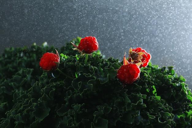 Красная малина на капустных листьях под дождем