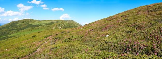 夏の山腹に赤いシャクナゲの花。 6ショットステッチ画像。