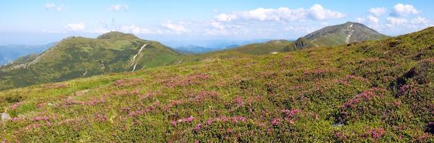 夏の山腹に赤いシャクナゲの花。 3ショットステッチ画像。