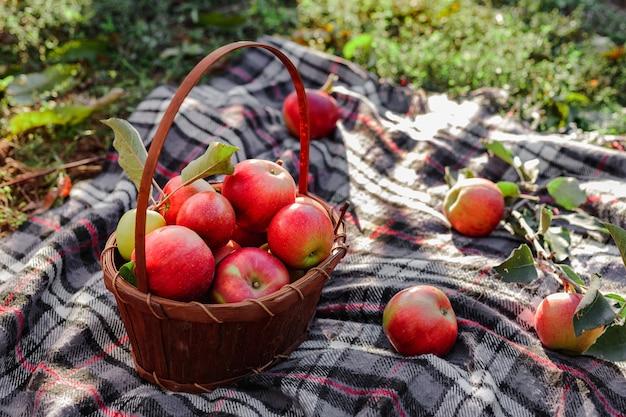 毛布の上の秋の果樹園の庭のバスケットの赤い熟したリンゴ。庭の新鮮なリンゴ