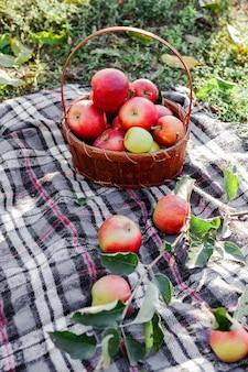 かごの中の赤い熟したリンゴ。自然の中で新鮮なリンゴ。村、素朴なスタイルのピクニック