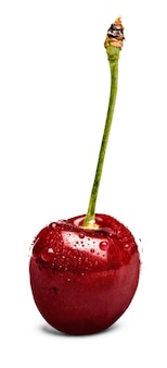 Red ripe cherry with green branch