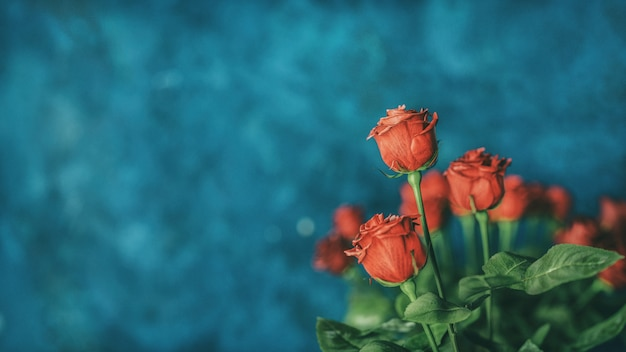 Red rose background with copyspace