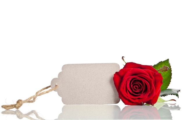 Red rose and blank gift card
