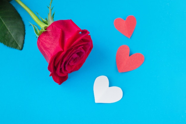 Red rose on blue background with heart.