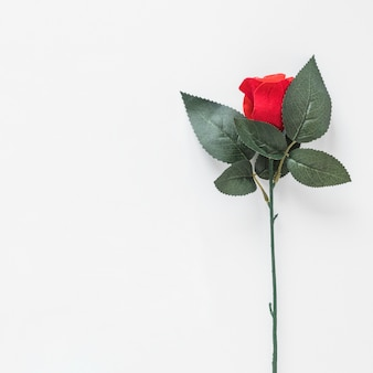 Red rose branch on table