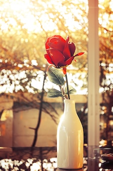 Red rose flower in glass vase