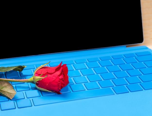 블루 typer 노트북에 빨간 장미 꽃