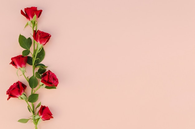 Red rose flowers in flat lay