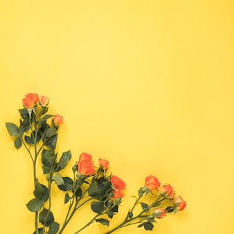 Red rose flowers on yellow table