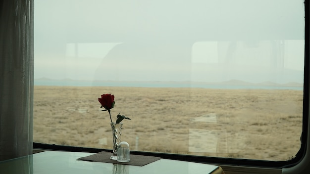 Red rose in front of the window on the train
