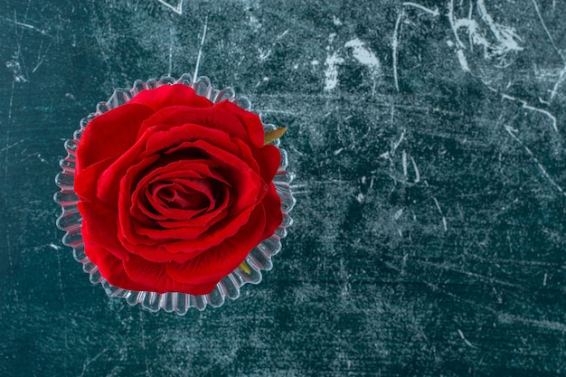 Red rose in a glass pedestal , on the blue background.