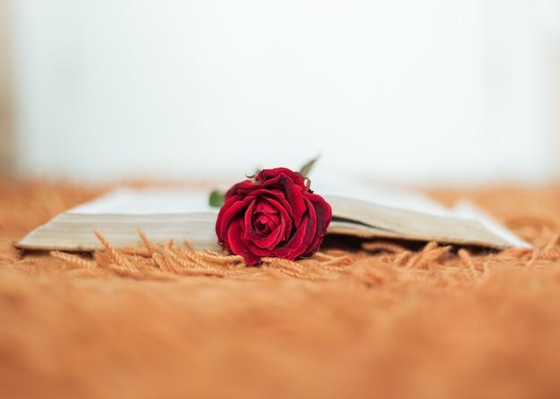 Red rose inside an open book