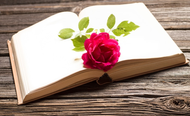 Red rose lies on a book