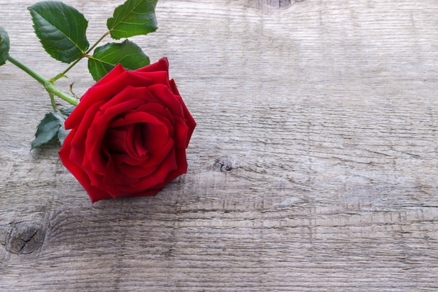 Red rose on old rustic wooden background