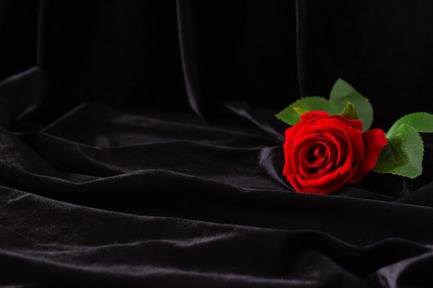 Красная роза на черном фоне