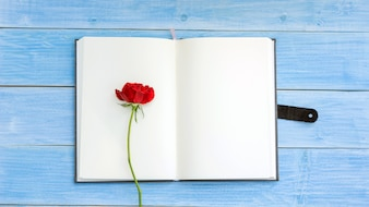 Red rose on a notebook and blue wooden table.