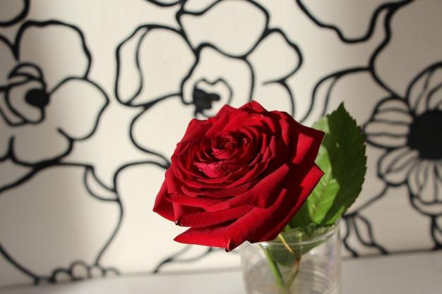 Красная роза на натуральном белом фоне с нарисованными цветами в черном контуре
