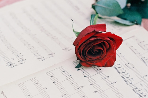 Красная роза на музыкальных нотах