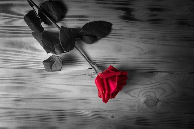 テーブルの上に赤いバラ。黒と白の写真