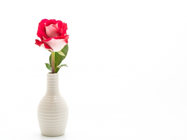 흰색 바탕에 빨간 장미