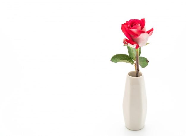 흰 벽에 빨간 장미