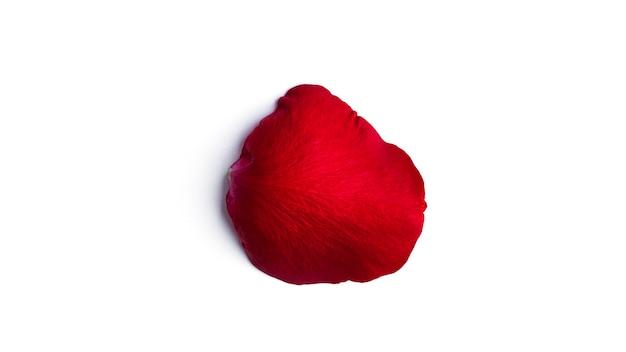 빨간 장미 꽃잎 흰색 배경에 고립입니다. 플라잉 꽃잎. 고품질 사진