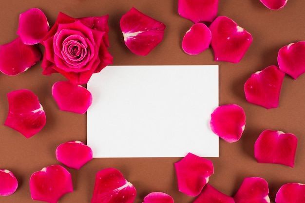 Red rose and petals around empty space