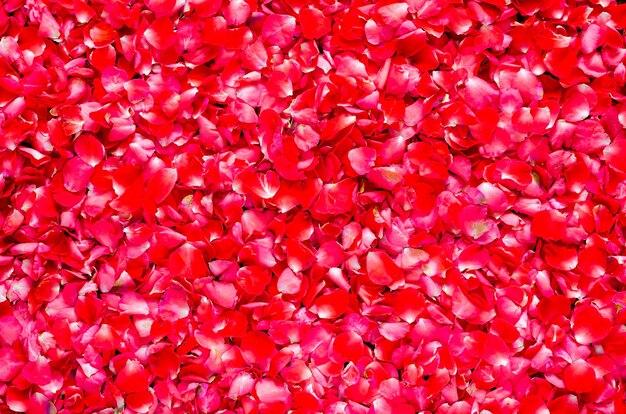 バレンタインデーと愛のコンセプトのための赤いバラの花びらの花の背景。